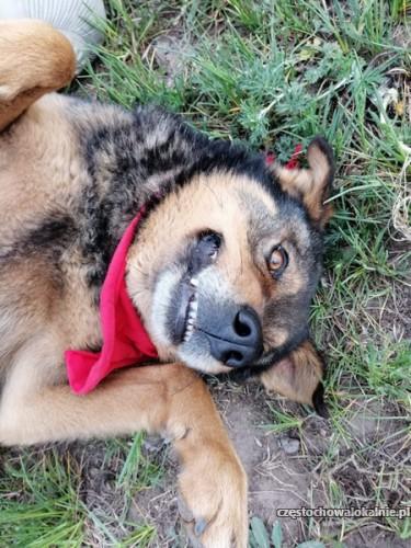 Stefan - kochany i wesoły psiak szuka domu!